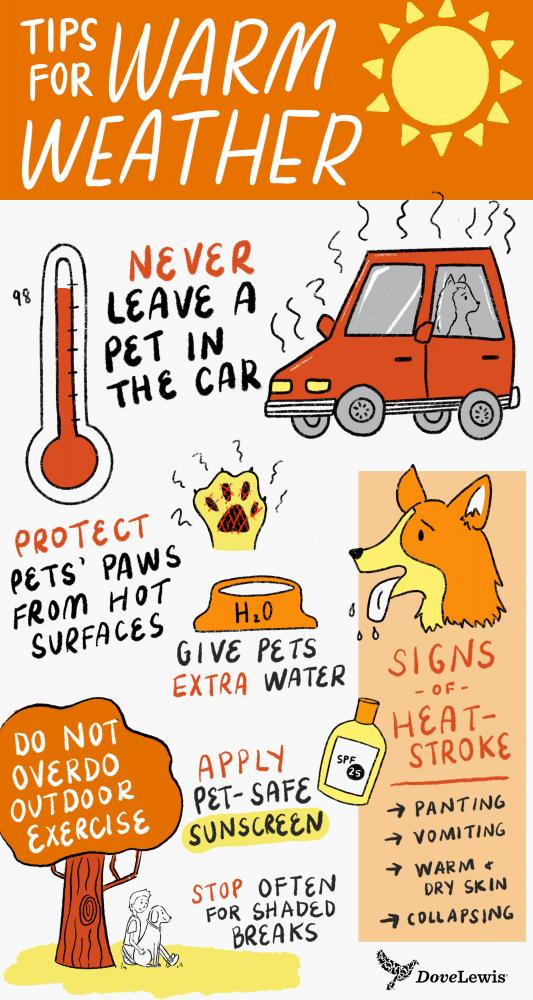 Hot weather pet safety tips