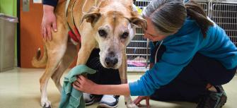 Financial Aid for Veterinary and Animal Emergencies at DoveLewis in Portland, Oregon