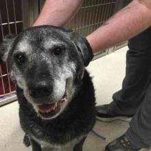 DoveLewis - Emergency Veterinary Animal Hospital - Open 24/7
